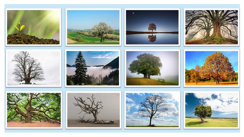 bomen-metafoor-ontwikkeling